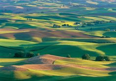 """WLAST Artist Mary Louise Ravese www.wlast.org1000 × 697Search by image """"Waves of Grain"""", fields of wheat, peas, lentils and mustard from the Palouse region of Washington State. Color photograph available on photographic paper or canvas."""