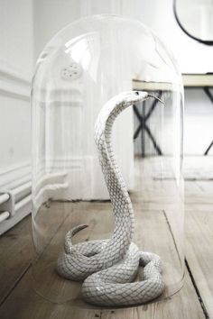 Glass Cloche, rubber snake, wire and spray paint