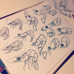 Anna Cattish ⚡️ #sketching #shrimps