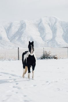 Sun Valley #snow # horses | HitherAndThither