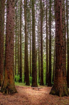 Redwood Park, Surrey, British Columbia, Canada by Martin Smith