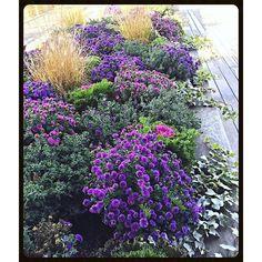 """#flower #purple #garden #botanic #nature #plants #earth #landscaping #design #blooming #botanicalgardens #suburbs #soil #fall #composition"" Photo taken by @akaaki157 on Instagram, pinned via the InstaPin iOS App! http://www.instapinapp.com (11/09/2015)"