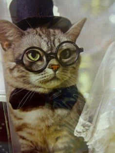 1000 images about cats wearing glasses on pinterest