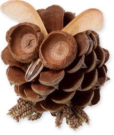 A craft of an owl made from a pine cone and other seeds