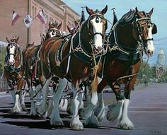 Clydesdales in the Cheyenne Frontier Days Parade..