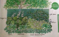 Skuggtåliga växter rabatt
