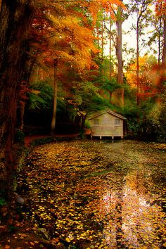 What I Like About Fall | Awesome cabin in the woods | Great Fall Colors