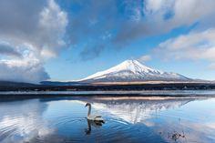 https://flic.kr/p/qV45eC   Fuji and Swan   山中湖 大池