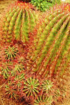 Garden Photo; Cactus