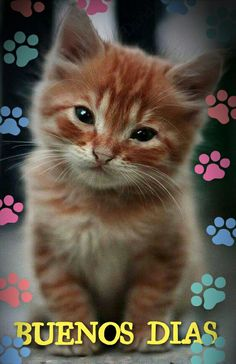 These cute kittens will brighten your day. Cats are wonderful companions. Cute Kittens, Kittens Meowing, Siamese Kittens, Beautiful Cats, Animals Beautiful, Ginger Kitten, Ginger Cats, Image Chat, Kitten Care