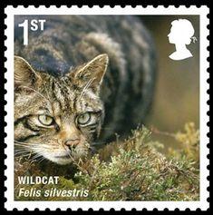 francobolli-animali1