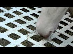 Lattice Slow Feeder For Horses - YouTube Horse Hay, Horse Feed, Horse Barns, Horse Slow Feeder, Hay Feeder For Horses, Diy Hay Feeder, Plastic Lattice, Retirement Cakes, Morgan Horse