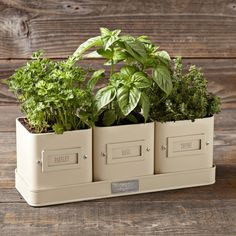 Modern + White + Minimalist: Easy Windowsill Herb Garden Planters ...