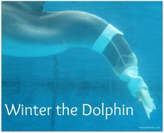 5 Reasons to Visit Clearwater Marine Aquarium, Home of Winter the Dolphin - Virtually Yours #DolphinTale2 #WinterHasHope