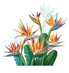 Flowers Illustration, Garden Illustration, Jungle Flowers, Plant Logos, Birds Of Paradise Flower, Flower Sketches, Plant Drawing, Vector Flowers, Tropical Flowers
