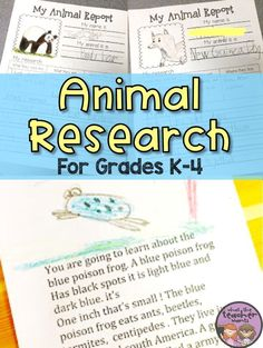 Animal reports are a fun way to get young students excited about doing research. This post shows how I differentiate my animal research for grades K-4. Writing templates and research pages are available to purchase to make these research reports easy for the younger grades: kindergarten, 1st grade, 2nd grade, 3rd grade.