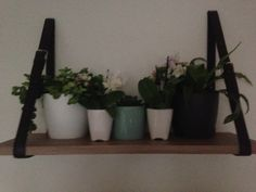 #plants #home #belt
