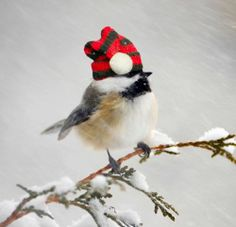Christmas Blank Cards /& Packs Traditional Red Robin in Snow Bird  FREEPOST