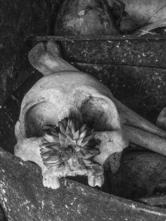 """©Aquí aún florecen, de la serie: """"Fiel Difunto"""" 03 de Noviembre de 2013 Campeche, Camp; México."""