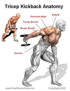 Patadas de triceps con mancuernas.