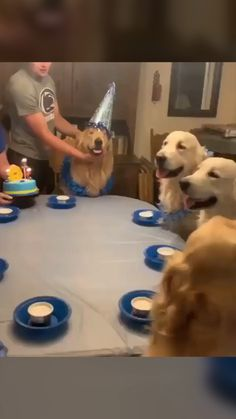 Golden Retrievers are so funny and cute - try not to laugh watching this ultimate compilation of labrador dogs and puppies. Golden Retrievers are one of the . Dumb Dogs, Cute Funny Dogs, Funny Dog Memes, Funny Animal Videos, Cute Funny Animals, Animal Memes, Videos Funny, Funniest Animal Videos, Cutest Animals