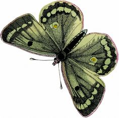 Vintage Green Butterfly Image! - The Graphics Fairy //  From a Circa 1863 German Natural History Butterflies and Moths Book.