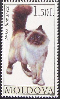 Moldova Birman cat 2007 - Birman Cat - Ideas of Birman Cat - flic.kr/p/prFvNy Birman Cats For Sale, Cute Cats, Funny Cats, Postage Stamp Art, Vintage Stamps, Cat Colors, Domestic Cat, Stamp Collecting, Guinea Pigs
