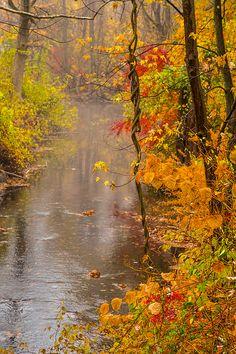 Fall delight