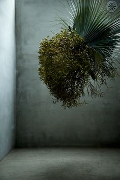 AMKK is a company developing the experimental creation by Makoto Azuma, a flower artsit, whose subject is flowers and plants. The activities of AMKK aim to increase the existential value of plants by. Deco Floral, Arte Floral, Ikebana, Wabi Sabi, Instalation Art, String Garden, Flower Installation, Floral Bouquets, Air Plants