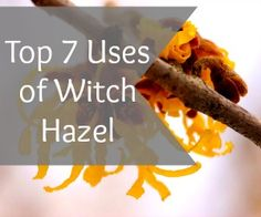 The 7 Top Uses of Witch Hazel - Holistic Health Herbalist