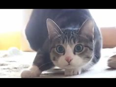 Cat Wiggle Wiggle Wiggle - YouTube