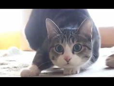 Cat Wiggle Wiggle Wiggle - YouTube