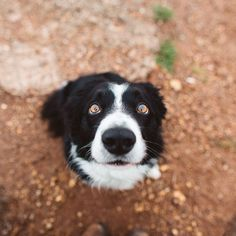 Momo is a border collie. He's hiding in all of these photos. Find Momo is a project by Andrew Knapp... #bordercollie