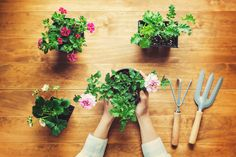 Bring the outdoors indoors with these five easy yet elegant DIY projects. Learn how to make a driftwood mirror, countertop herb garden, and more here! Backyard Plants, Wellness Spa, Home Hacks, Eating Well, Glowing Skin, Diy Projects, Herbs, Canning, Small Changes