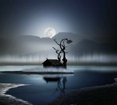 Faeries, Great Photos, Twitter, Moonlight, Fairy Tales, Fantasy, Celestial, Outdoor, Conversation