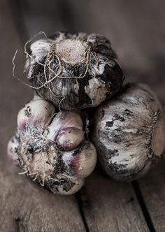 Garlic by onegirlinthekitchen