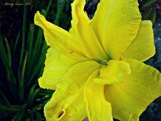 Double Yellow