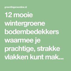 12 beautiful evergreen ground cover, with which you can create beautiful, smooth surfaces … - Innen Garten - Eng Love Garden, Home And Garden, Sophie's World, Ground Covering, Green Art, My Secret Garden, Garden Inspiration, Garden Ideas, Evergreen