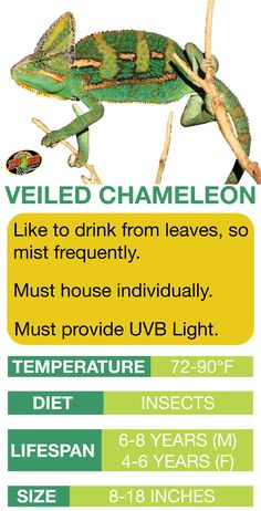 45 Best Chameleon Care Images Reptile Cage Terrarium Ideas