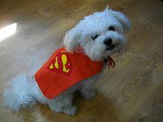 Small Dog Puppy Cape Costume - Superman - Superdog - Dress Up - Photo Shoot on Etsy, Sold