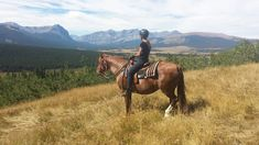 Chestnut Canadian Horse at Canadian Hay Ranch and broodmare Canadian Horse, Black Canadians, Horses For Sale, Ranch, Animals, Guest Ranch, Animales, Animaux, Animal