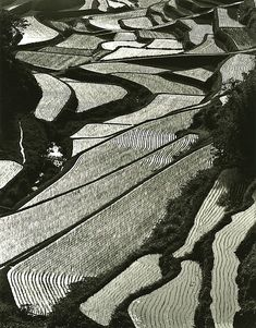 Japanese rice terrace, photo by Haruto MAEDA. Life imitating art.