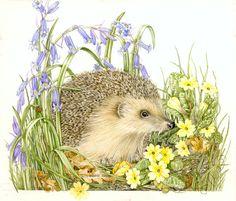 Sheila Mannes-Abbott Botanical Artist