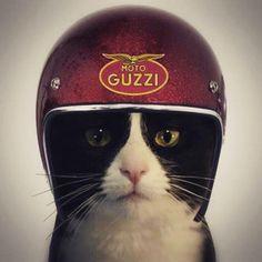 "Moto Guzzi""...."