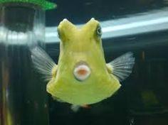 「碧南水族館」の画像検索結果
