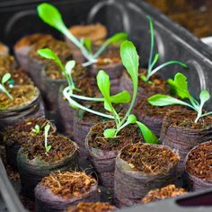 How to Live Frugally . Grow your own food