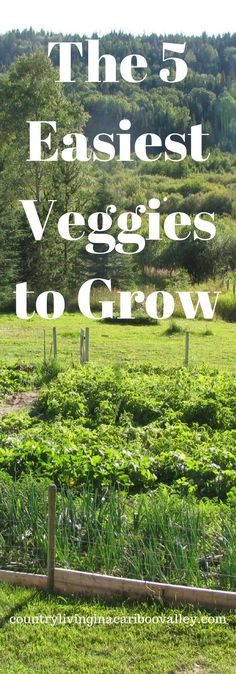 Which 5 veggies are the easiest to grow? Find out and get our newsletter! Gardening, livestock, country living all in one place.