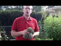 It is important to save seeds leeks are very easy to save here is how. http://thewisconsinvegetablegardener.com/2014/09/04/saving-leek-seeds-quick-tip/