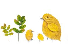 leaf birds collage