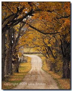 Flickriver: Photos from Dufferin, Winnipeg, MB, Canada Seasons Of The Year, Take Me Home, View Image, Pretty Pictures, Falling In Love, Spice, Nature Photography, Country Roads, Canada